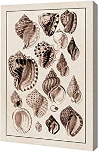 "PrintArt GW-POD-64-394526-20x30""外壳:Purpurifera(棕褐色)""由 G.B. 出品。 Sowerby 画廊装裱艺术微喷油画艺术印刷品 24"" x 36"" GW-POD-64-394526-24x36"