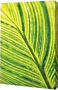 PrintArt Leaf Detail III Erin Berzel 14 英寸 x 20 英寸 GW-POD-11-PSBZL-286-14x20