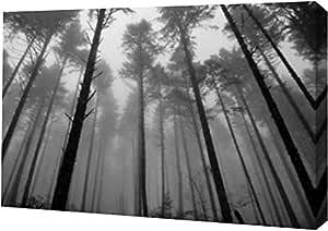 "PrintArt GW-POD-11-PSMRE-131-16x11""Redwoods II"" Brian Moore 画廊装裱艺术微喷油画艺术印刷品 12"" x 8"" GW-POD-11-PSMRE-131-12x8"