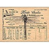 florilèges 设计印章 fe213009 剪贴簿蜻蜓米色 5X 7X 2.5厘米