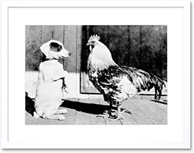 PHOTO DOG ROOSTER FRIENDS ANIMALS 新框印画 F12X5567 白色 12-Inches x 16-Inches F12X5567_WH