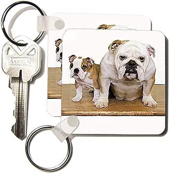 kc_8578 Dogs Bulldog - British Bulldog Male - Key Chains
