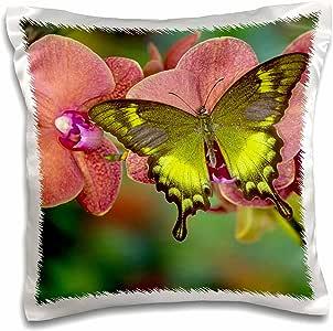 3drose danita delimont–蝴蝶–绿色 swallowtail 蝴蝶–枕套