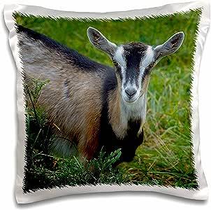 houk 摄影–animals–YOUNG goat–枕套